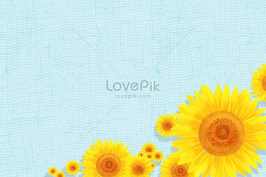 hình nền hoa hướng dương cho iphone 7
