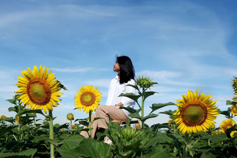 khung cảnh hoa hướng dương