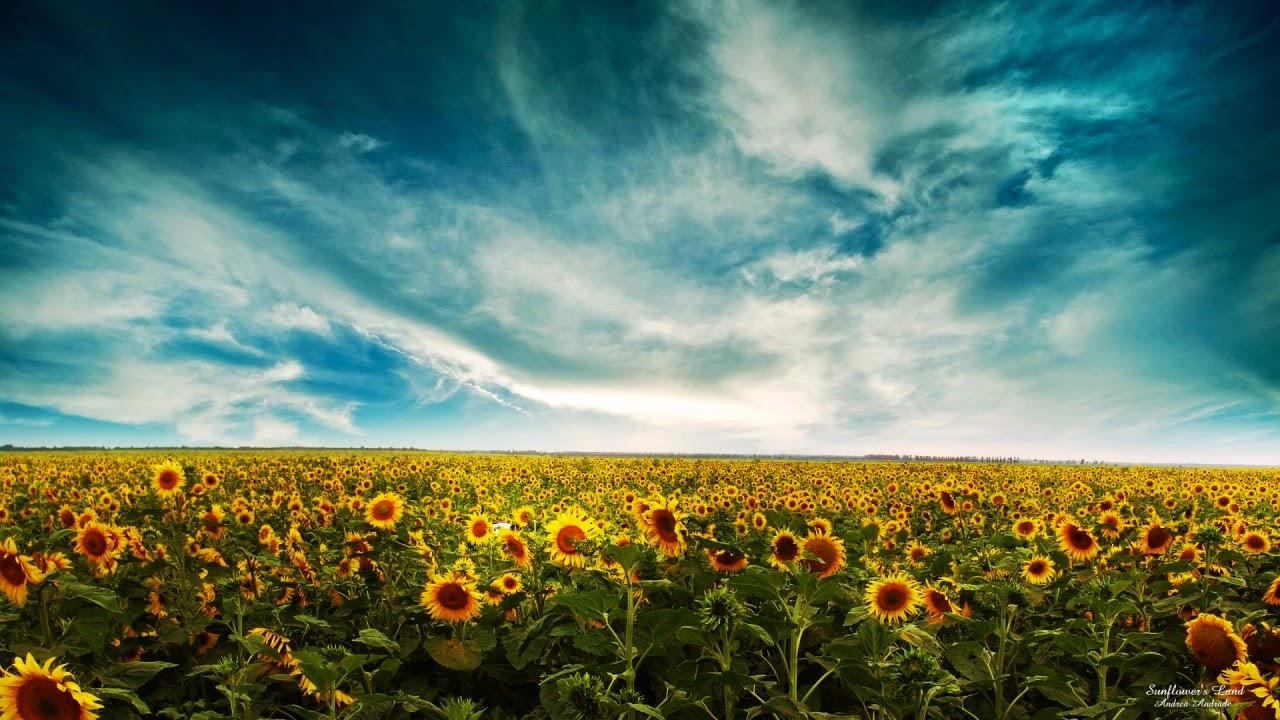 cách tạo dáng chụp ảnh hoa hướng dương