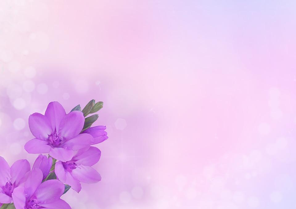 hoa màu tím lá nhỏ