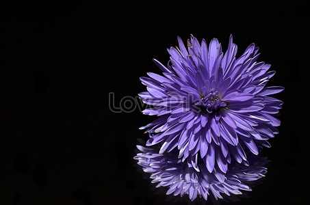 nàng yêu hoa màu tím