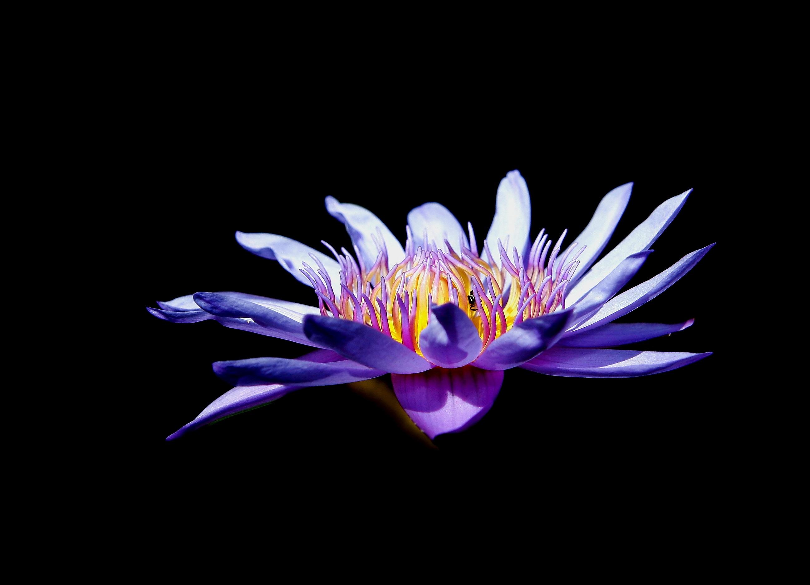 hoa màu tím khô