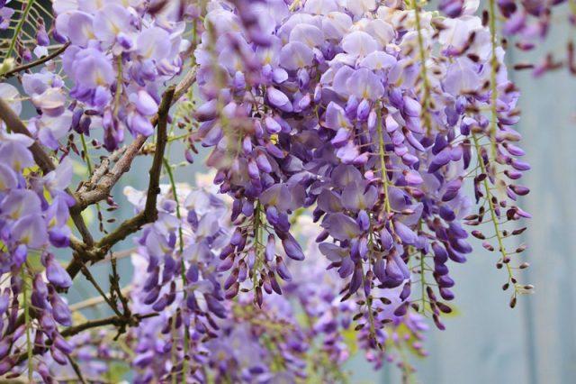 bó hoa nhỏ màu tím
