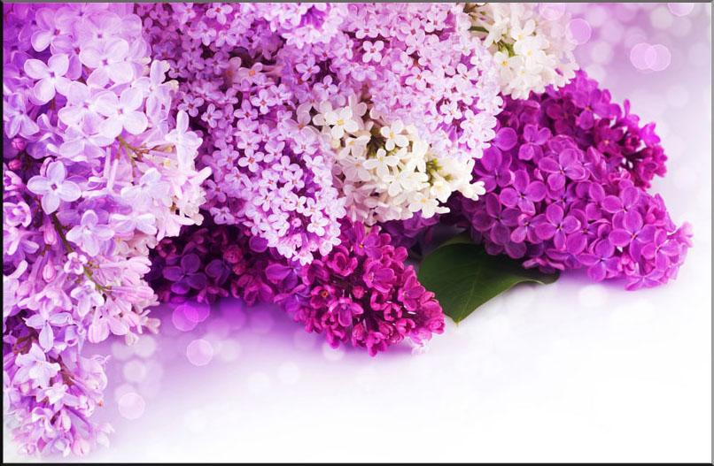 1 hoa màu tím