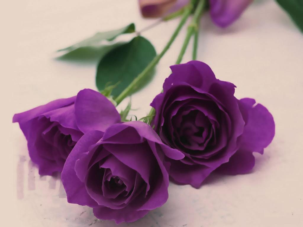 nước hoa màu tím mini