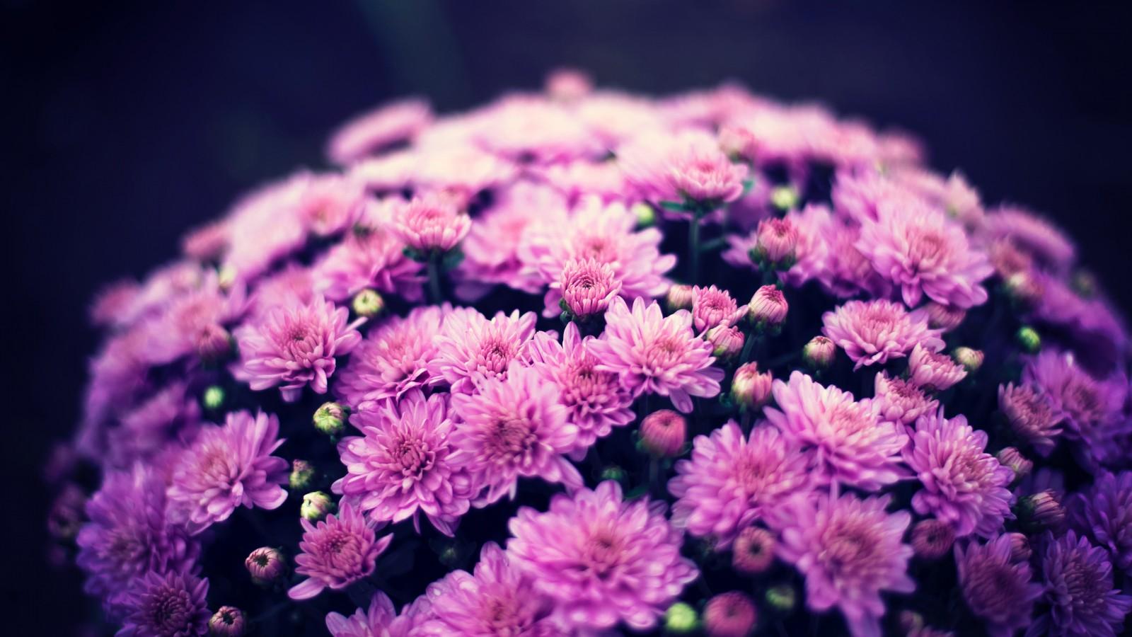 rừng hoa màu tím