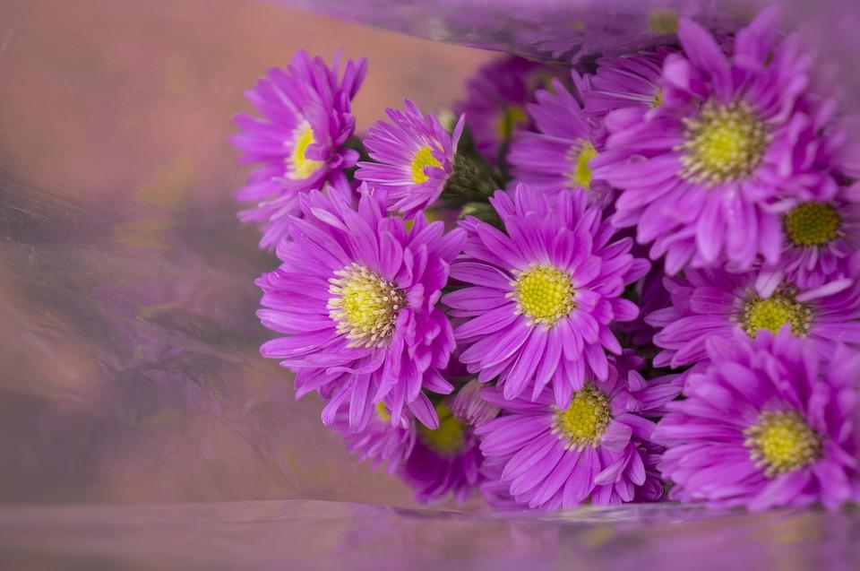 cây gì hoa màu tím