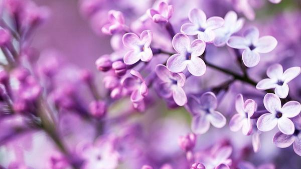 hoa quả màu tím