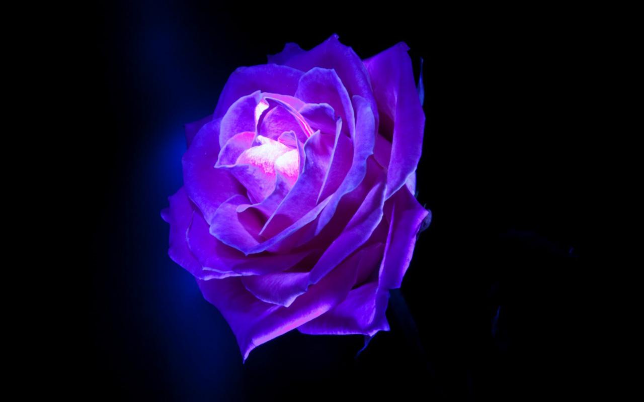nước hoa imari màu tím