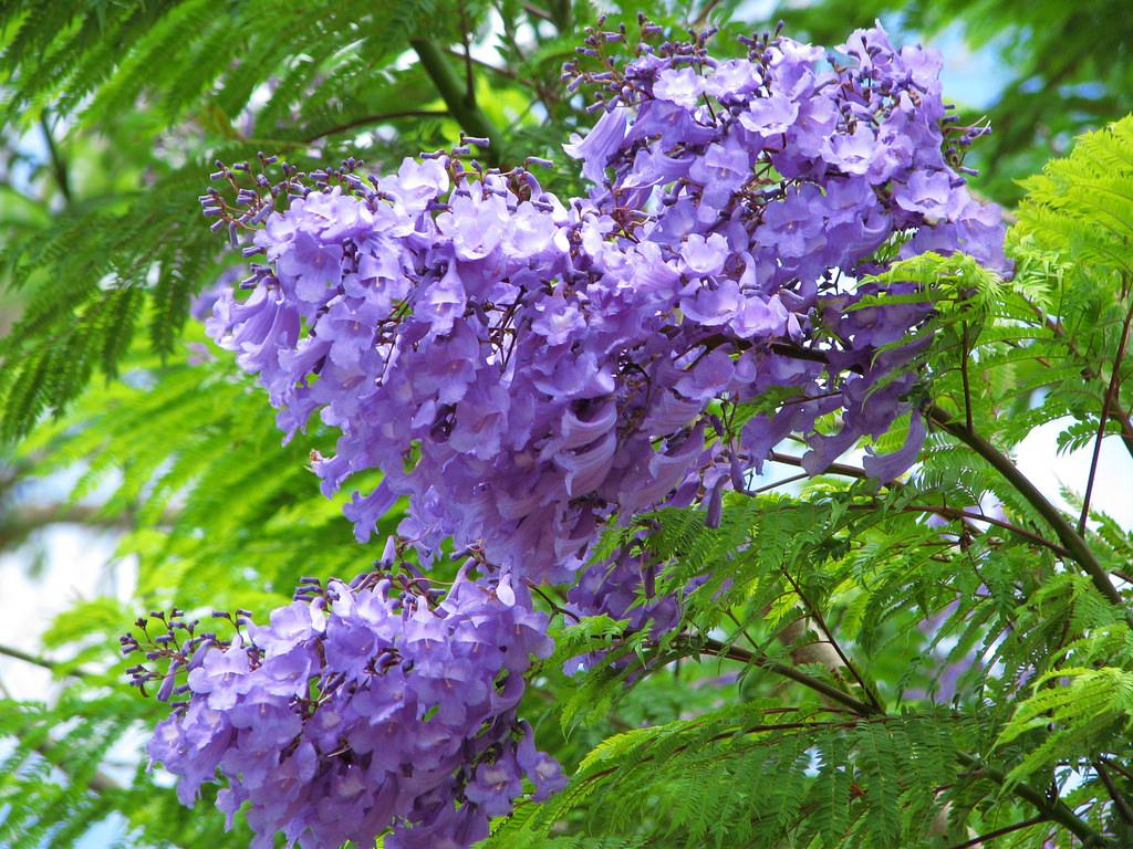 màu hoa tím đã qua thời nông nổi