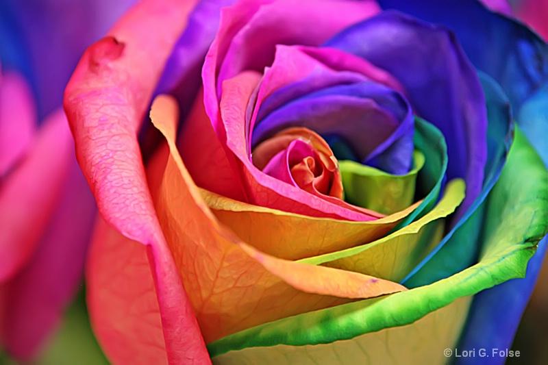 hình nền hoa hồng đẹp nhất