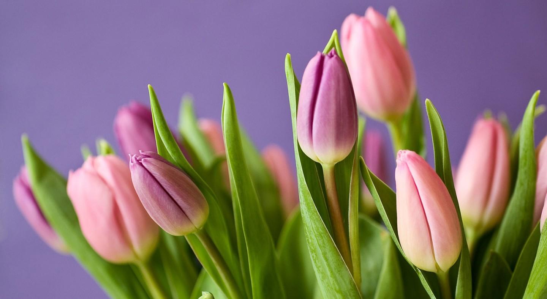 hình nền hoa màu hồng