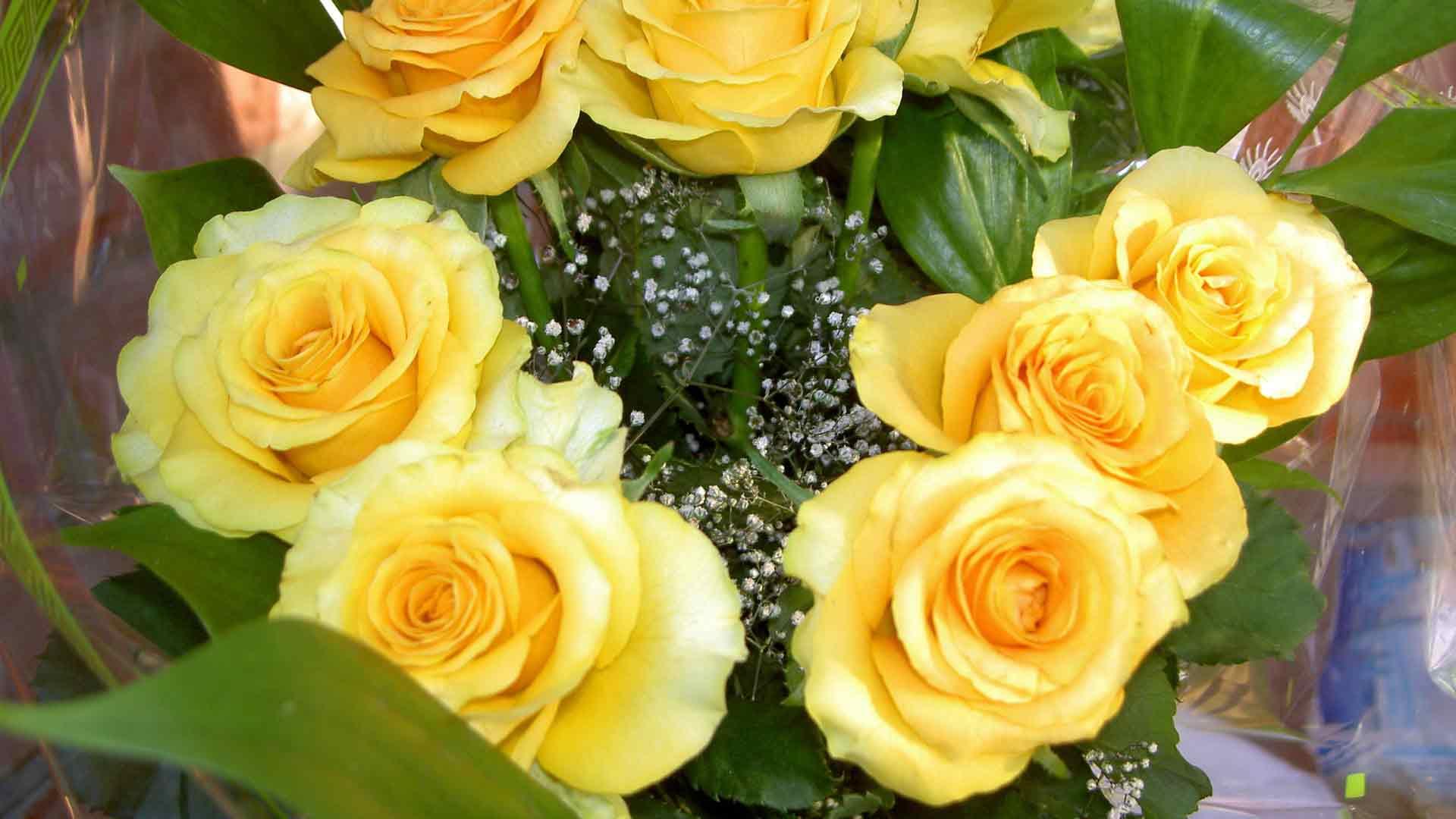 hình nền hoa hồng sinh nhật