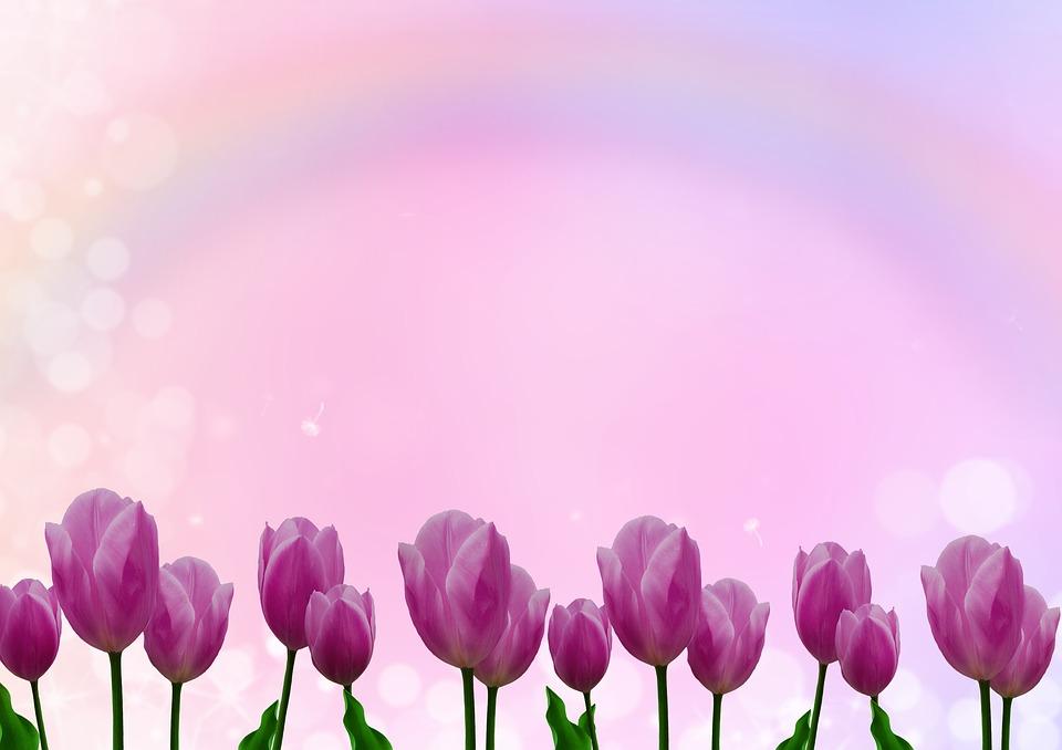 hình nền hoa hồng miễn phí