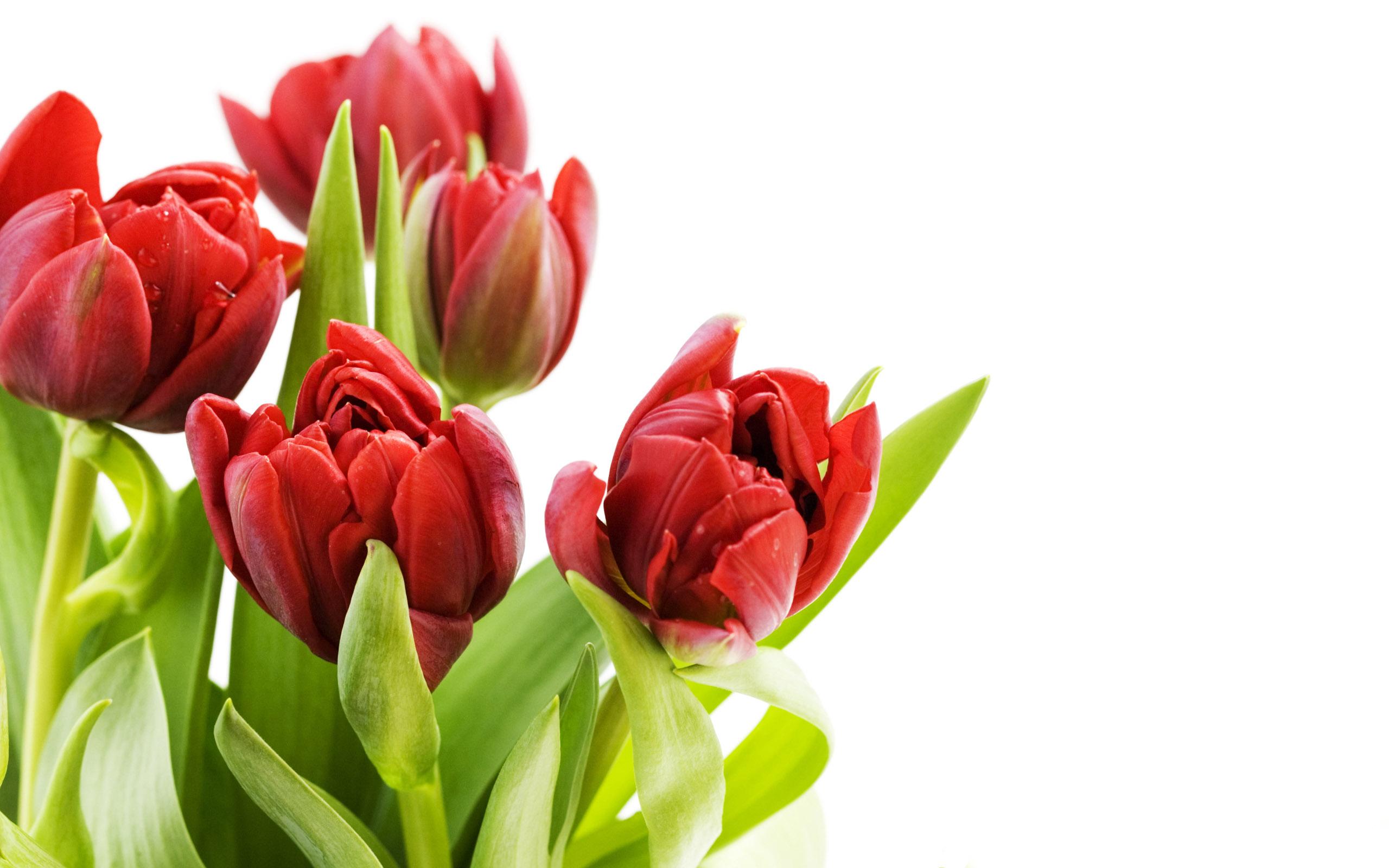 hình nền màu hồng hoa hong