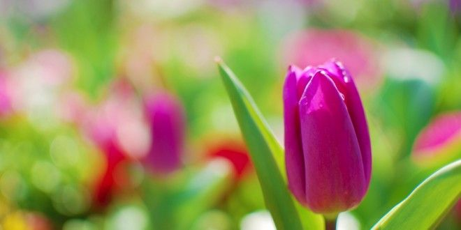 hình nền hoa hồng dep