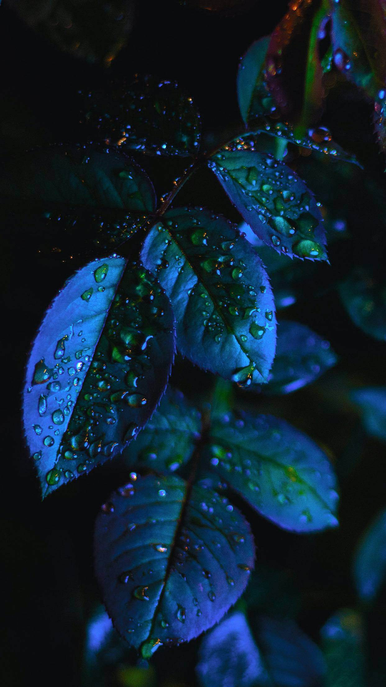 wallpaper iphone x green