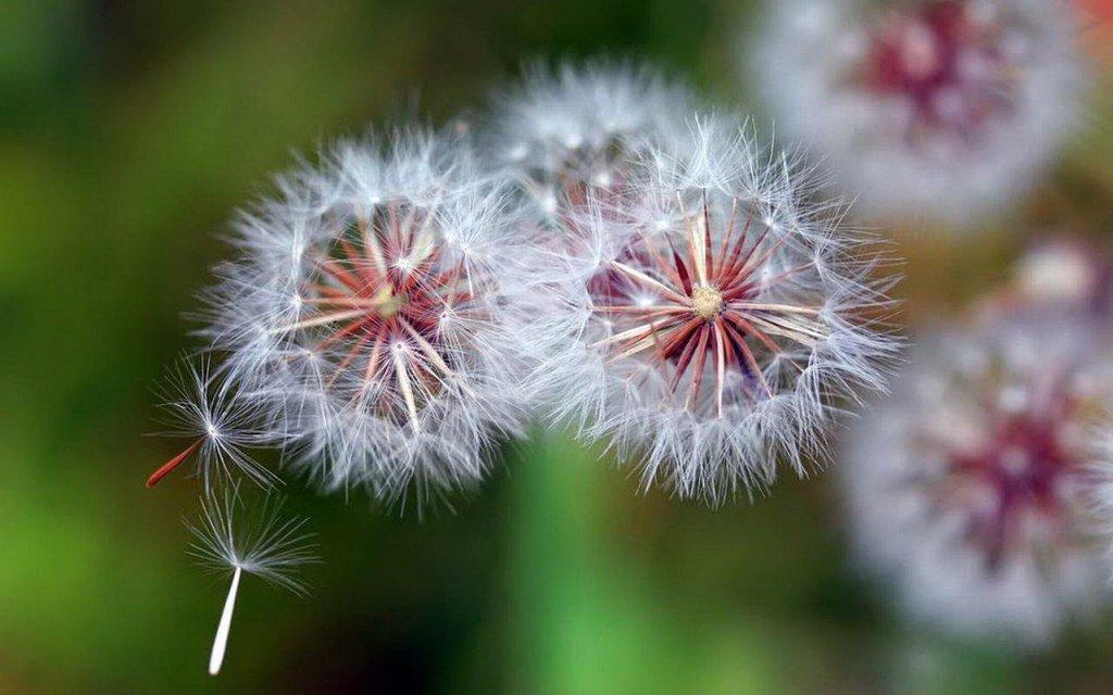 hình xăm 3d hoa bồ công anh