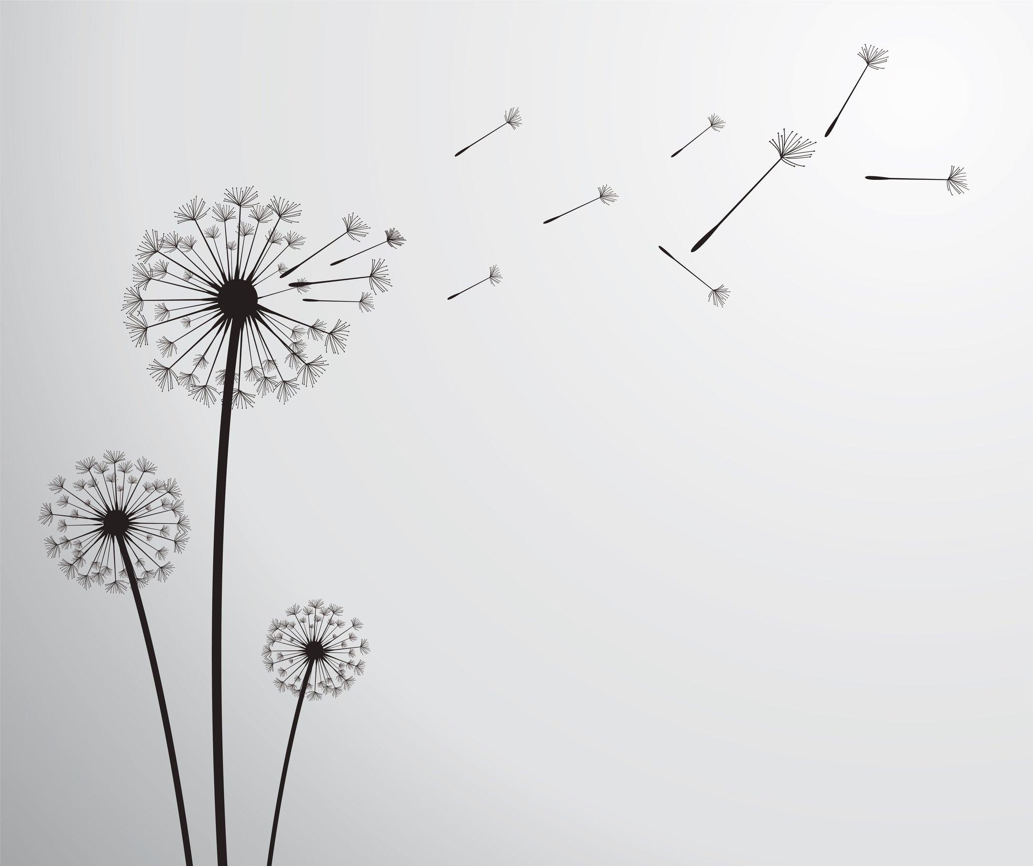 hoa bồ công anh và gió
