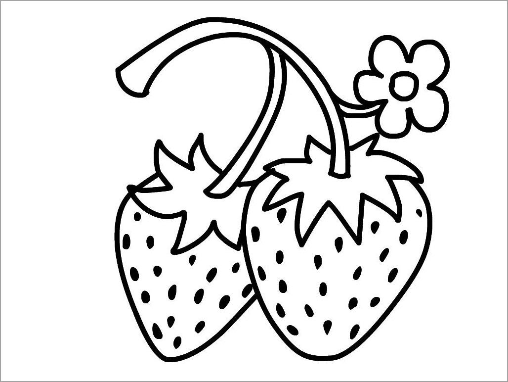 hình trái cây