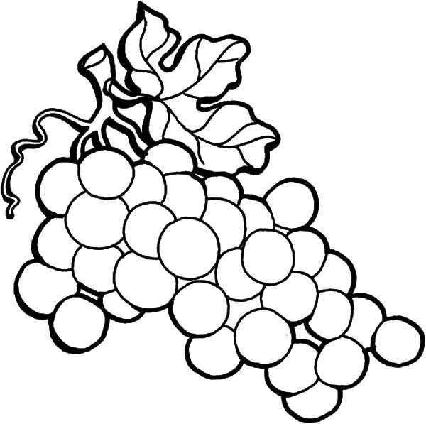 hình vẽ quả chuối