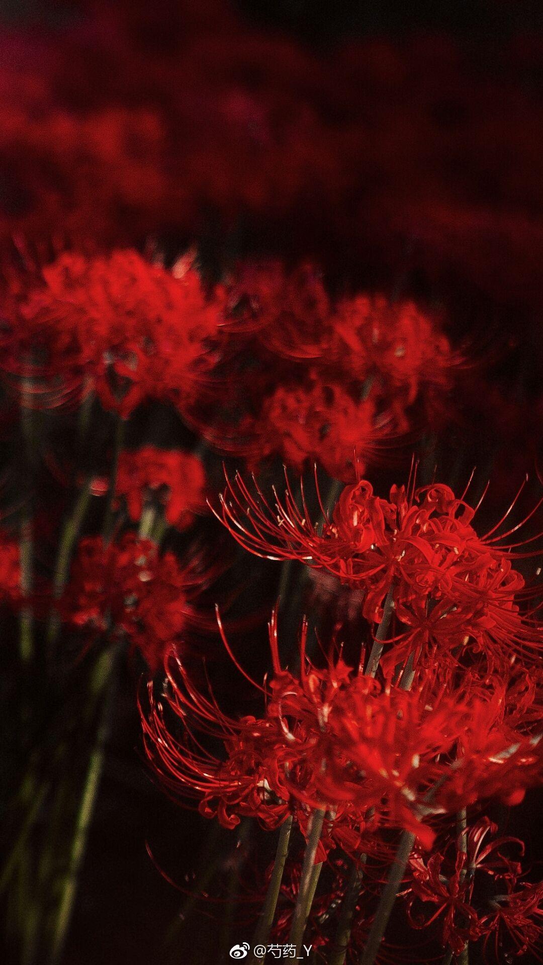 bi ngan hoa
