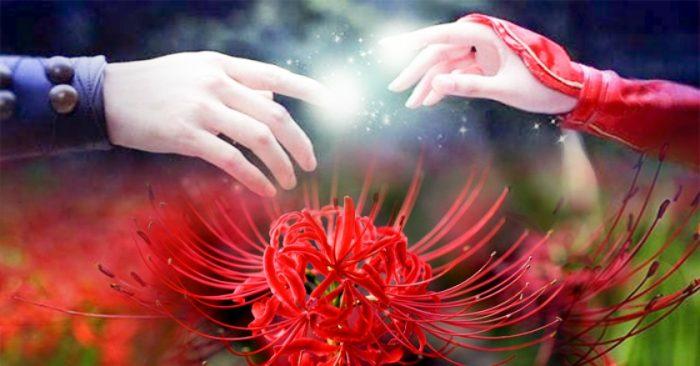 hinh hoa ve
