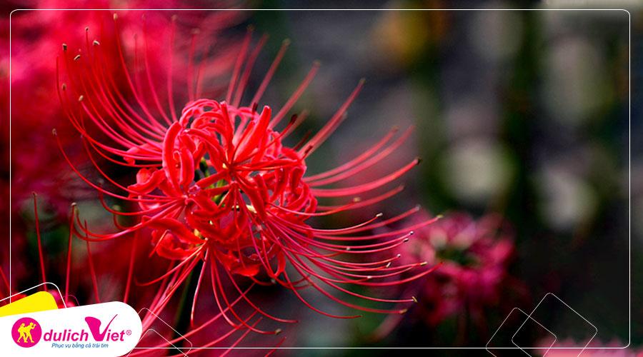 hình nền hoa bỉ ngạn