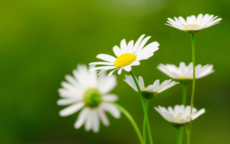 hình ảnh đẹp về hoa