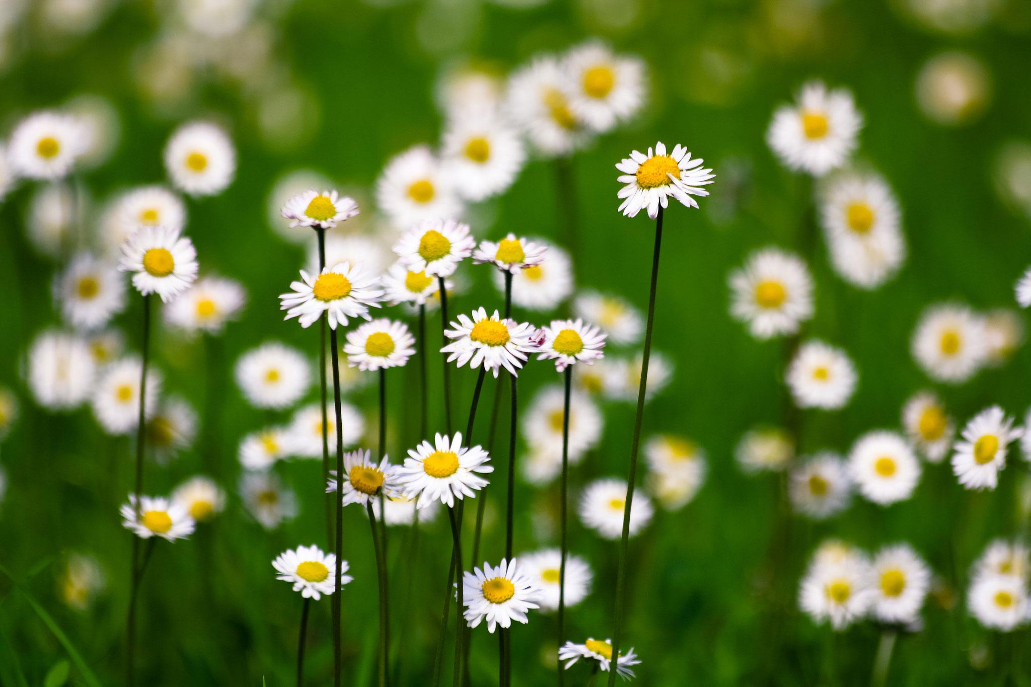ảnh đẹp hoa