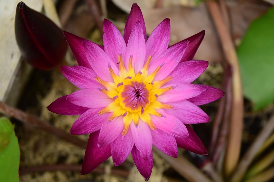hình nền pc hoa sen