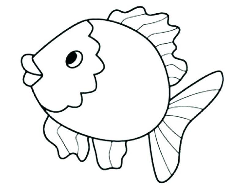hình ảnh con cá heo