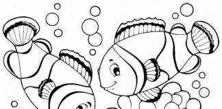 cá tô màu
