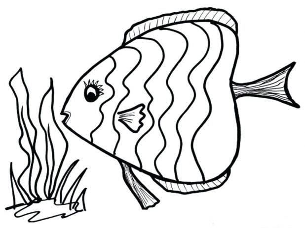 vẽ cá voi