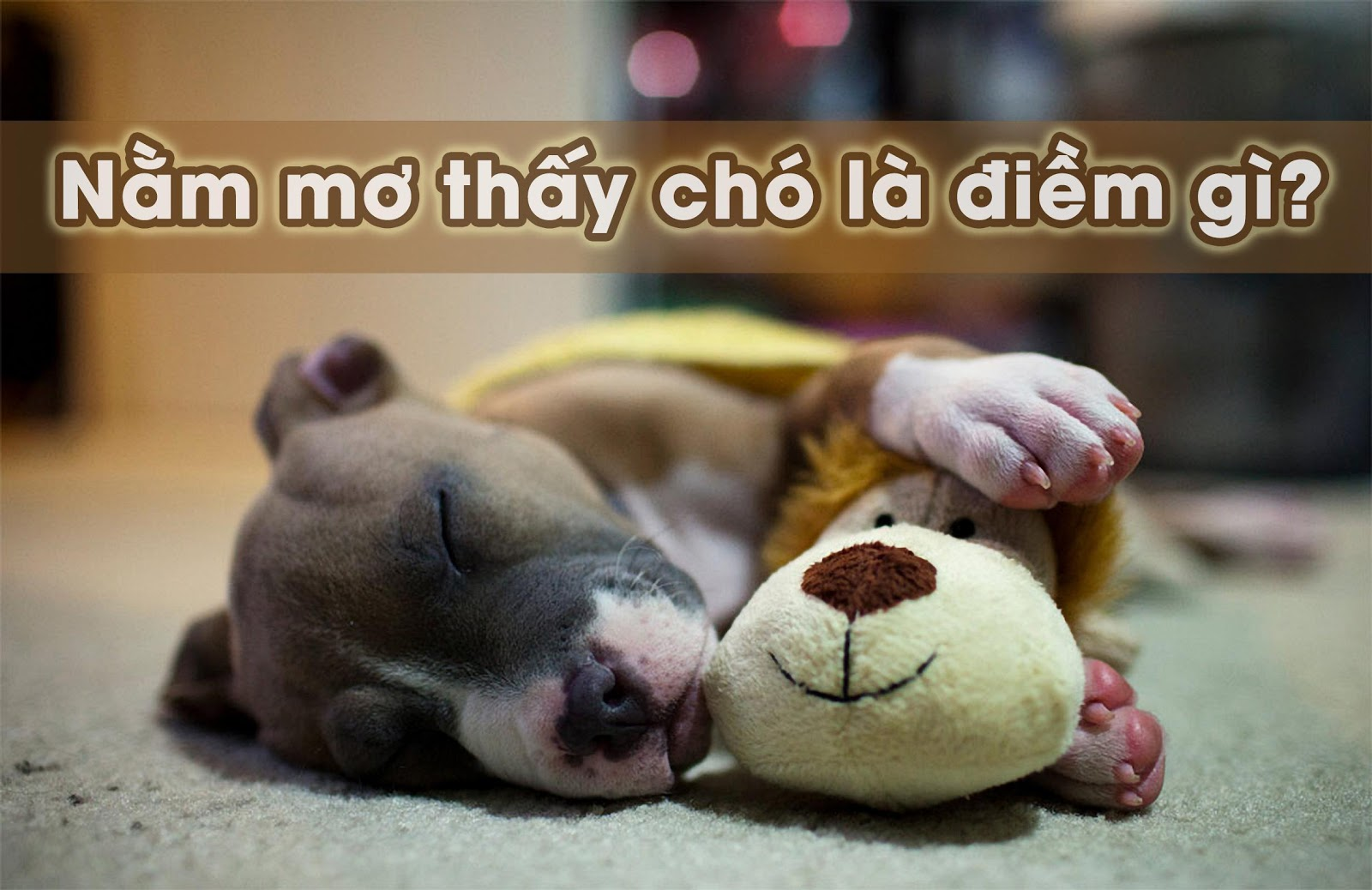 Nằm mơ thấy chó mang đến điềm báo xấu hay tốt? - Kuviet.com