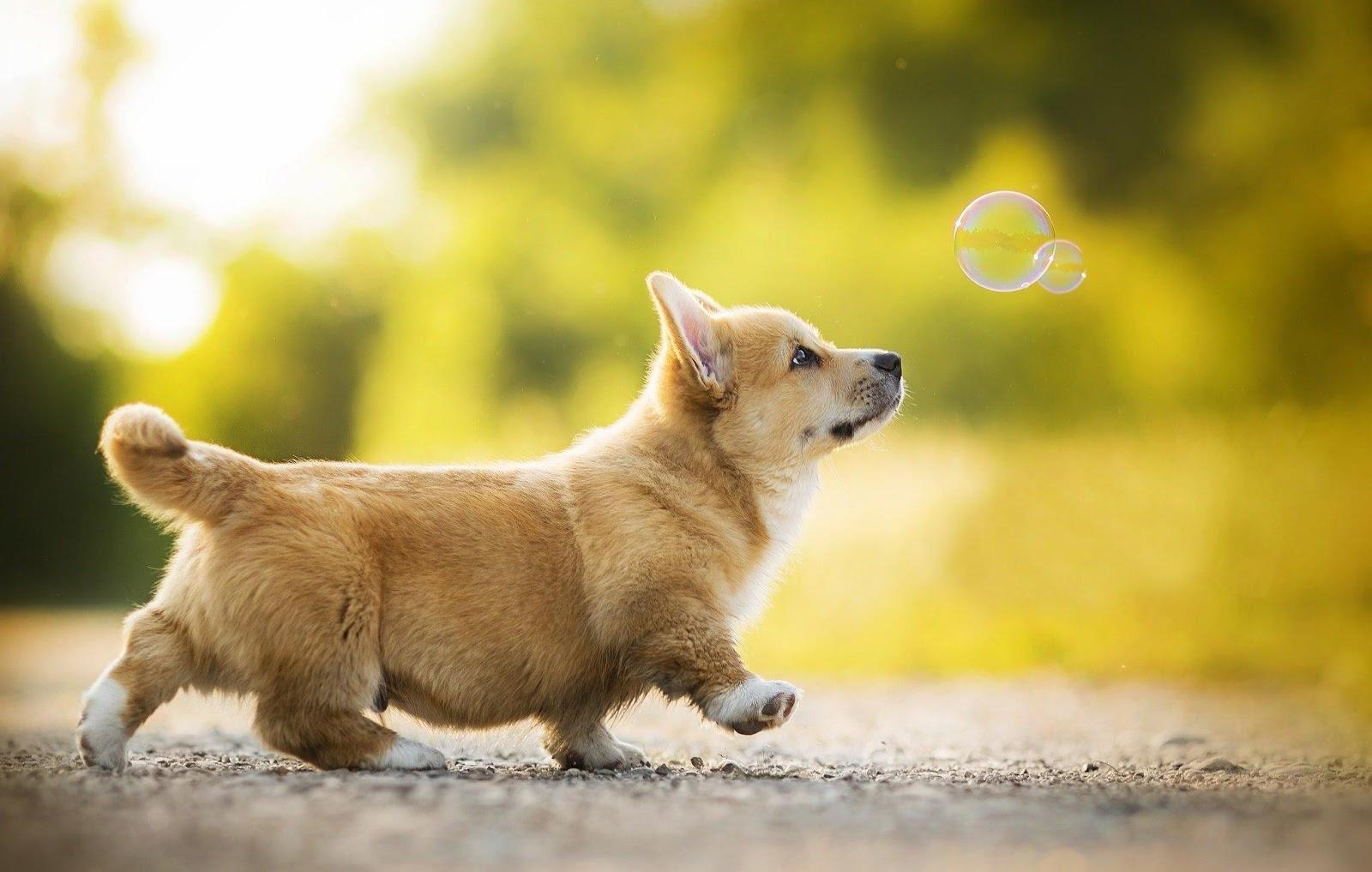 Giấc mơ thấy chó mang ý nghĩa đặc biệt